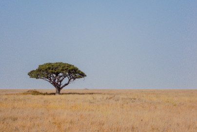 the-serengeti-03537