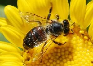 https://prwatch.org/spin/2011/01/9840/leaked-epa-memos-may-explain-massive-bee-die